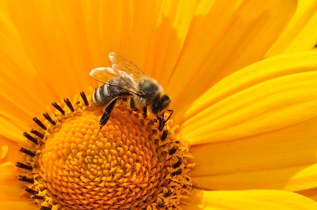 Pszczoła, Pszczół, Pszczelim - Biznestemat.pl